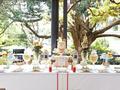 ボタニックガーデン・レストラン ミールクーポン&事前予約サービスシドニー王立植物園内で優雅なランチタイム
